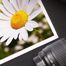 Camera parts rest on a stylized photo of a daisy