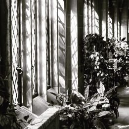 Dappled sunlight nourishes the peace plants in the cloister hallway.